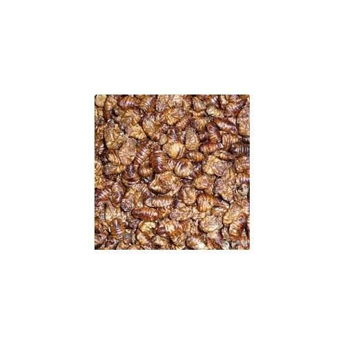 Vers à soie (pot de 300g)