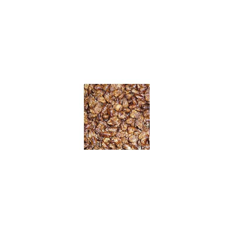 Vers à soie (pot 1.5kg)