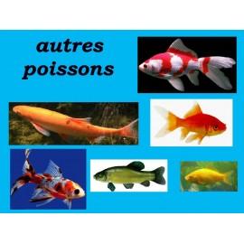 Autres poissons